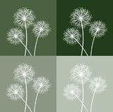 Green and white dandelion Royalty Free Stock Photo