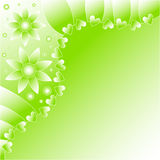 Green and white flower background Royalty Free Stock Photography