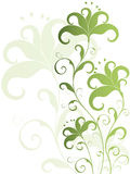 Green and white flower background Royalty Free Stock Photos