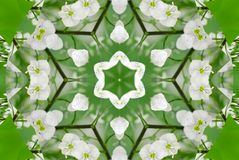 Green white flower kaleidoscope pattern abstract background. Abstract kaleidoscope background. Floral abstract spiral effect patte Royalty Free Stock Image