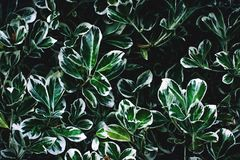 Green and White Leaves Stock Photography