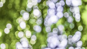 Green and white light blur bokeh of the natural stock photo