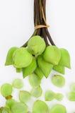 Green white lotus flower. Bouquet green white lotus flower Stock Photos