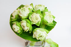 Green white lotus flower. In glass jug Stock Photos