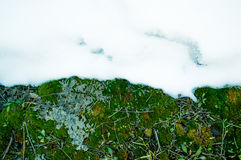 Green and white. Green moss and white snow as a meeting of two seasons Stock Photo