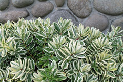 Green and White Plant in front of a Stone Wall Stock Images