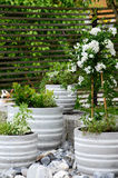 Green and white plants arranged in a stone garden Stock Photo