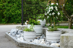 Green and white plants arranged in a stone garden Stock Image