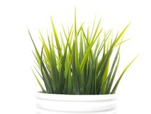 Green and White Royalty Free Stock Images