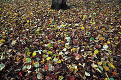 Green White and Red Leaves Royalty Free Stock Image