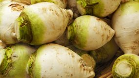 Green and white turnips Royalty Free Stock Photo