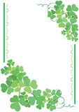 Green and white vector floral card. Vector green and white floral card Royalty Free Stock Photo