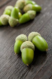 Green whole acorns Royalty Free Stock Images