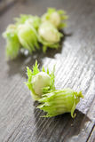 Green whole hazelnuts Royalty Free Stock Photos