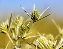Green wild flowers Stock Photos