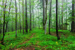 Green wild forest Royalty Free Stock Photos