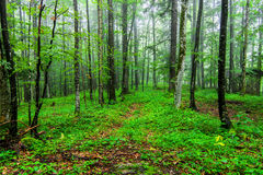 Green wild forest Stock Photos