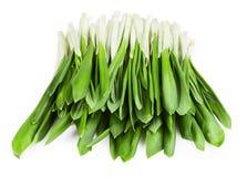 Green wild garlic Stock Photo