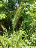 Green wild grass and other green plants Royalty Free Stock Photo