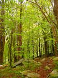 Green and wild nature, forest in Catalonia (Spain) Royalty Free Stock Image