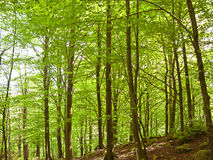 Green and wild nature, forest in Catalonia (Spain) Stock Photos