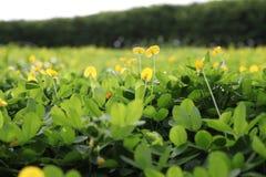 Green wild plants Stock Photos