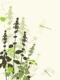 Green wildflowers Stock Image
