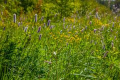 Green wildflowers and grasses. Russian wildflowers and green grasses stock photo