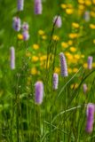 Green wildflowers and grasses. Russian wildflowers and green grasses stock images