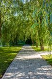 Green Willow Alley stock images