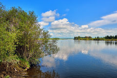 Green willow on bank of Irkut River Royalty Free Stock Images