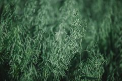 Green willow leaves texture background. nature. closeup. Green willow leaves texture background stock image