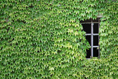 Green window. Old house in Beaujolais Stock Photography