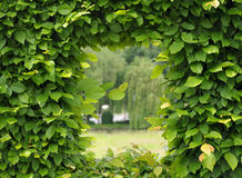 Green window. In city parc Stock Photography
