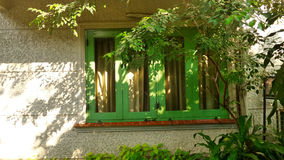 Green window  and tree shade in the garden. Green windiw and tree shade on white wall Stock Photography
