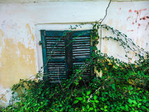 Green shutters. On weathered wall with vines Stock Image