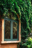Green window and yellow wall covered with vines Royalty Free Stock Photos