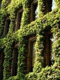 Green windows Royalty Free Stock Image