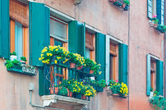 Green windows and yellow flowers Stock Image