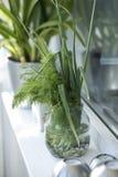Green windowsill. Green dills and onions on a white windowsill Royalty Free Stock Photo