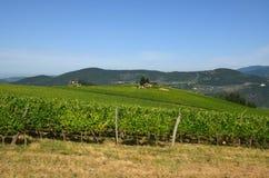 Green Wineyards in Tuscany, Chianti, Italy. Wineyards in Tuscany, vinegrapes, and leaves vine. Chianti region, in Tuscany, Italy stock photo