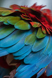 Green-winged macaw Ara chloropterus. Also known as the red-and-green macaw. Plumage texture Royalty Free Stock Photos