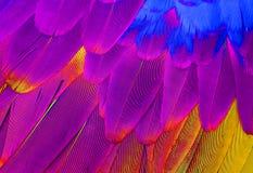 Green-winged Macaw (Ara chloropterus). Beautiful Green-winged Macaw (Ara chloropterus) back feather Royalty Free Stock Photography