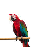Green-winged Macaw Ara chloropterus red birds isolated on white background with clipping path. Stock Photography