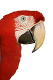 Green-winged Macaw Stock Photos
