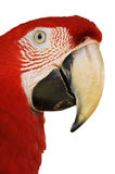 Green-winged Macaw. A Close up Green-winged Macaw face isolated on white background stock photos