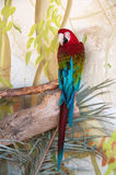 Green-Winged macaw in nature surrounding Stock Images