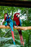 Green Winged Macaws at Parque das Aves - Foz do Iguacu, Parana, Brazil. Green Winged Macaws at Parque das Aves in Foz do Iguacu, Parana, Brazil royalty free stock photography
