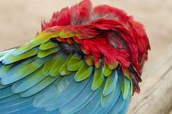 Green-winged parrot in Iguazu Stock Photo