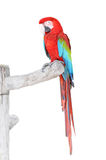 Green Wings Macaw with clipping path Royalty Free Stock Photos